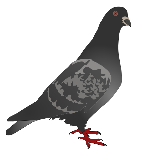 Free Pigeon Clip Art