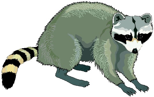 Free raccoon clipart image