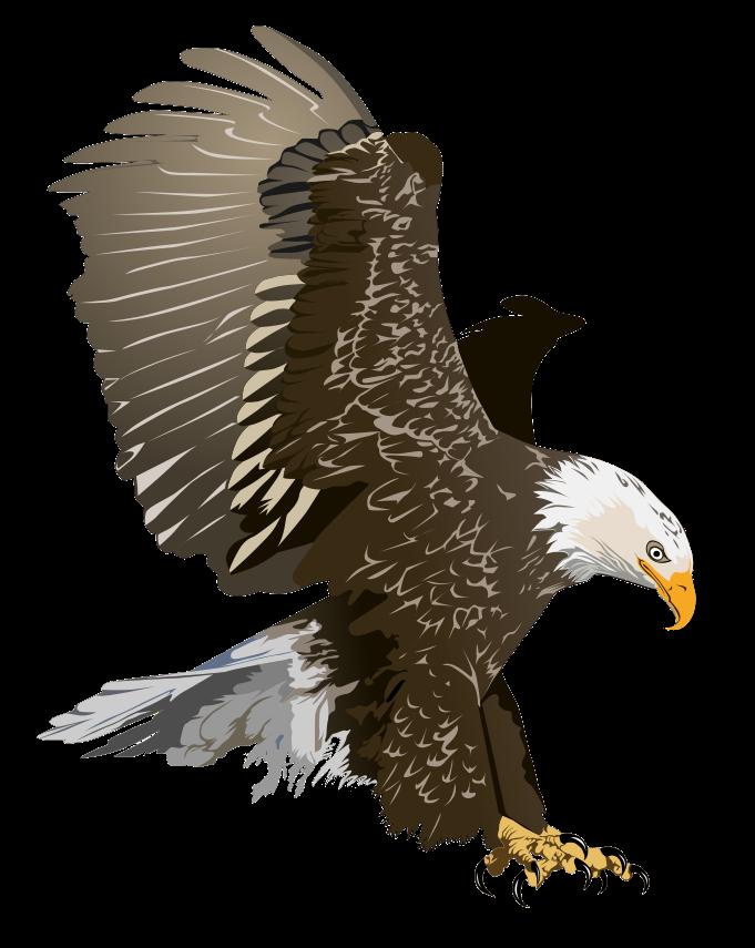 Free Realistic Bald Eagle Clip Art u0026middot; eagle5