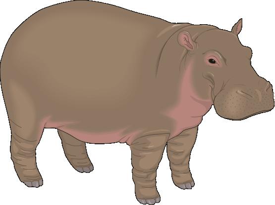 Free Realistic Hippopotamus Clip Art