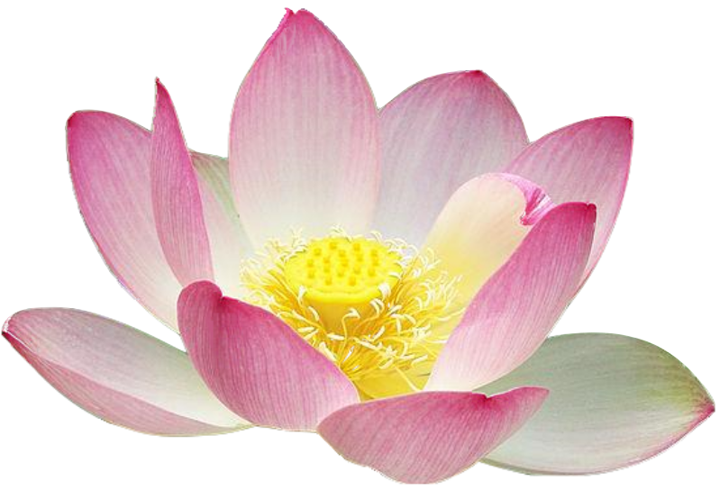Free Realistic Lotus Flower Clip Art
