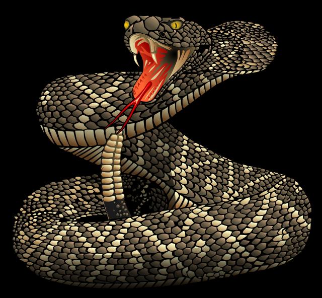 Free Realistic Rattlesnake Clip Art-Free Realistic Rattlesnake Clip Art-4