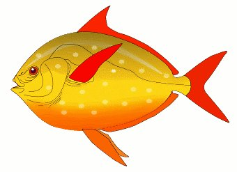 Free Red Finned Fish Clipart Free Clipar-Free Red Finned Fish Clipart Free Clipart Graphics Images And-15