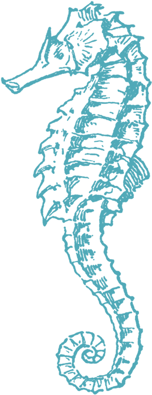 Free Sea Horse Clip Art