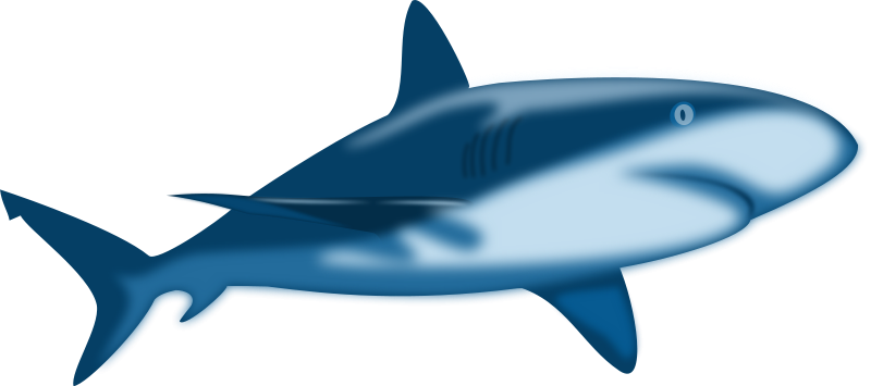 Free Shark Clipart - Clipart library