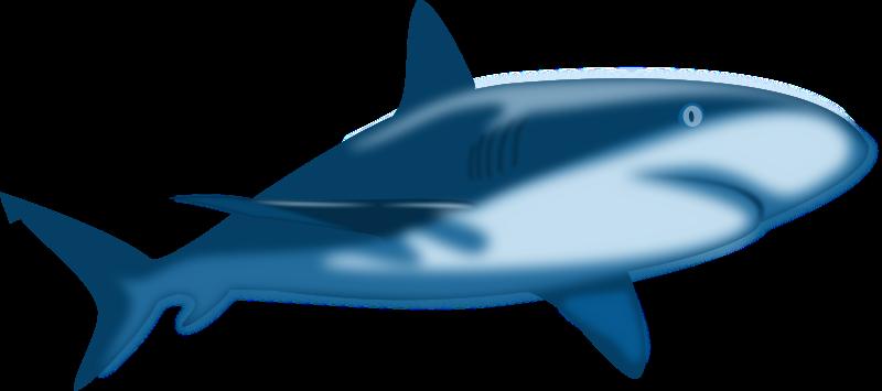 Free Shark Clipart - Clipart Library-Free Shark Clipart - Clipart library-6