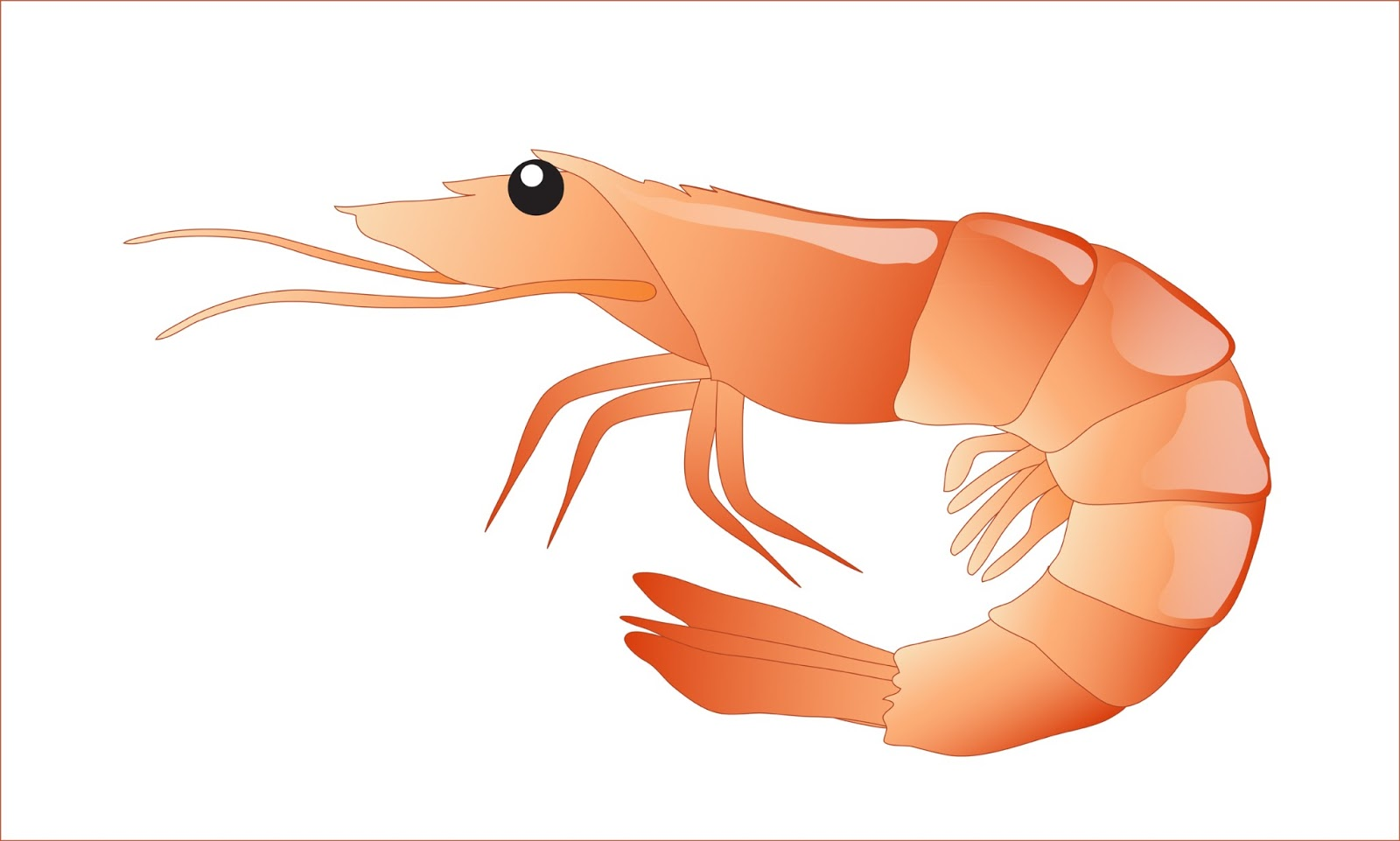 Free shrimp clipart 1 page of public dom-Free shrimp clipart 1 page of public domain clip art image-0