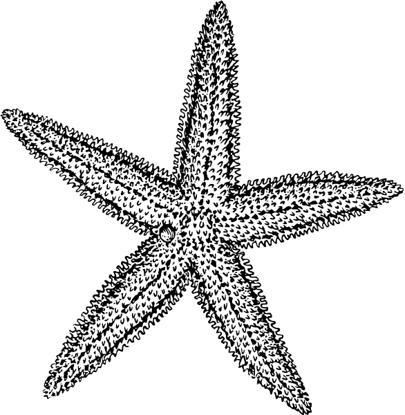Free Starfish Clipart, 1 page - Free Starfish Clipart