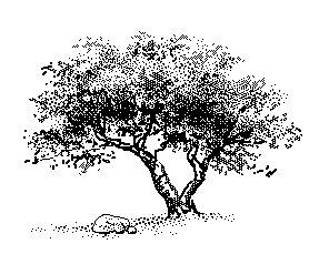 Free Tree Clipart. Tree-by-rock .-Free Tree Clipart. tree-by-rock .-7