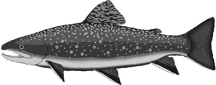 Free Trout Clipart-Free Trout Clipart-4