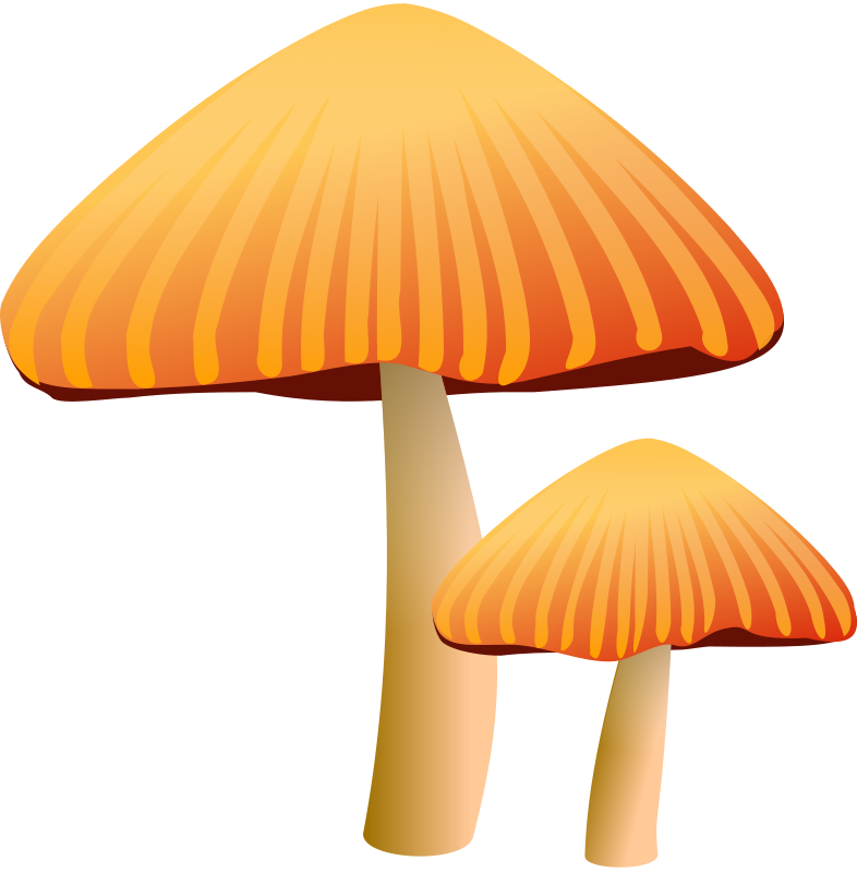 Free Two Orange Mushrooms Clip Art