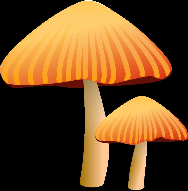 Free Two Orange Mushrooms Clip Art-Free Two Orange Mushrooms Clip Art-17