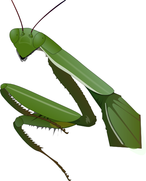 ... free vector Praying Mantis clip art