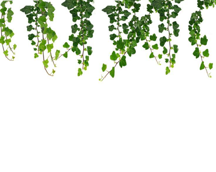 Free Vine Clip Art Pictures - Clipartix-Free Vine Clip Art Pictures - Clipartix-5