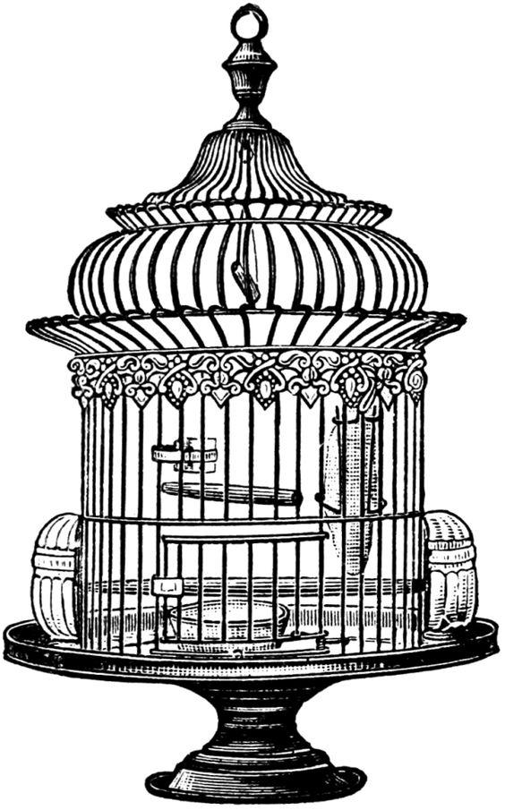 Free Vintage Bird Cage Clip Art-Free Vintage Bird Cage Clip Art-13