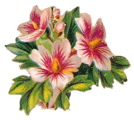 ... free-vintage-cli-art-flowers-pink-white-hibiscus