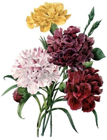 ... free vintage clip art flowers yellow purple pink red carnation bouquet ...