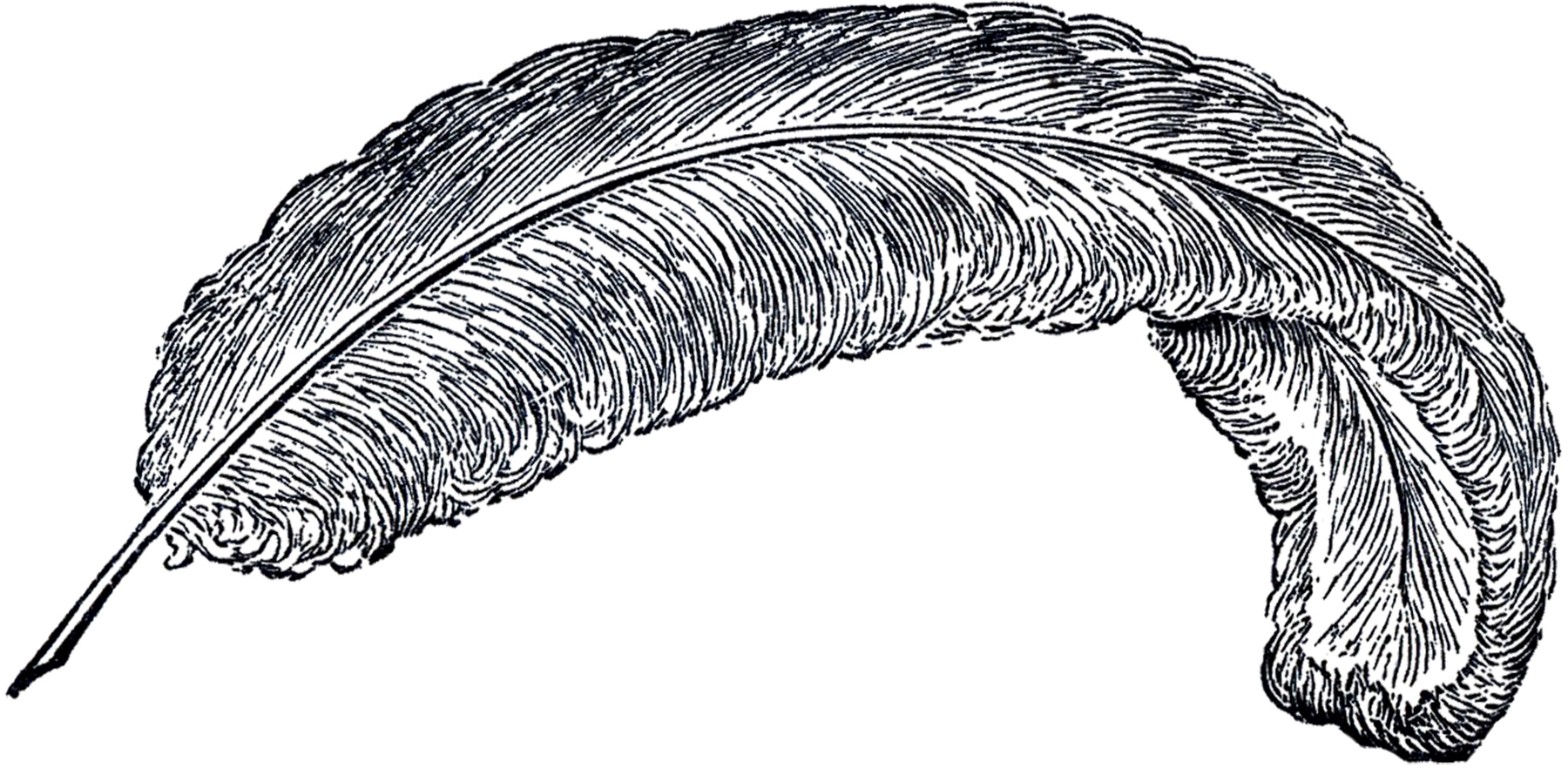Free Vintage Feather Clip Art