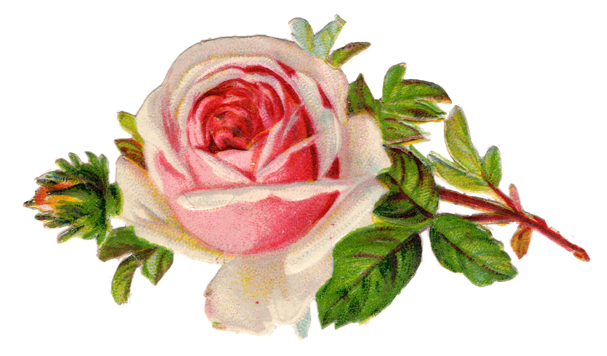 Free Vintage Rose Clip Art Free Pretty T-Free Vintage Rose Clip Art Free Pretty Things For You-11