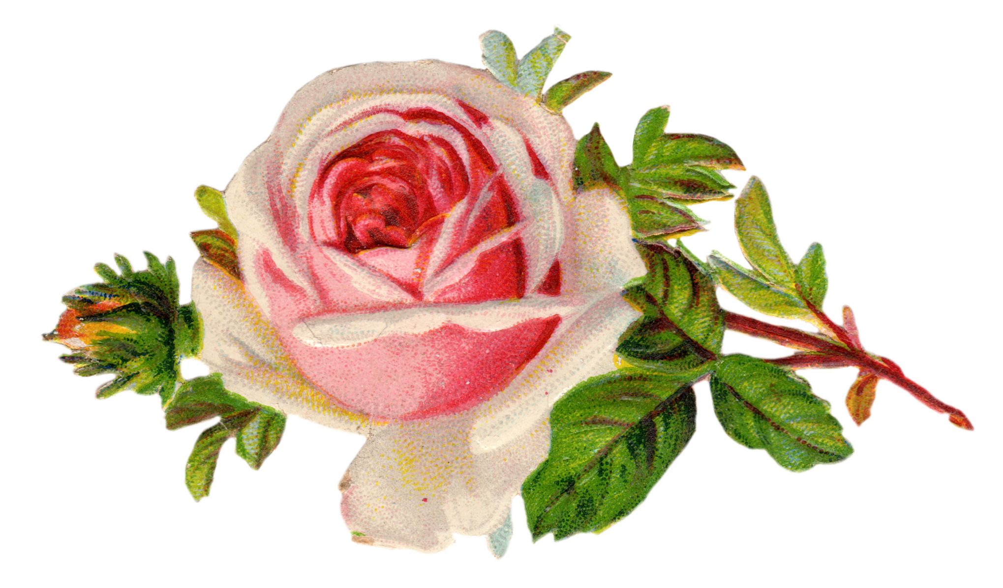 Free Vintage Rose Clip Art Free Pretty Things For You