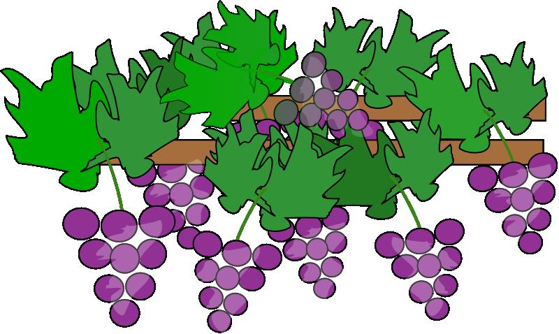 Free Whole Vine of Grapes Clip Art-Free Whole Vine of Grapes Clip Art-16