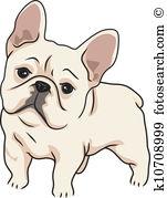 French Bulldog-French Bulldog-0