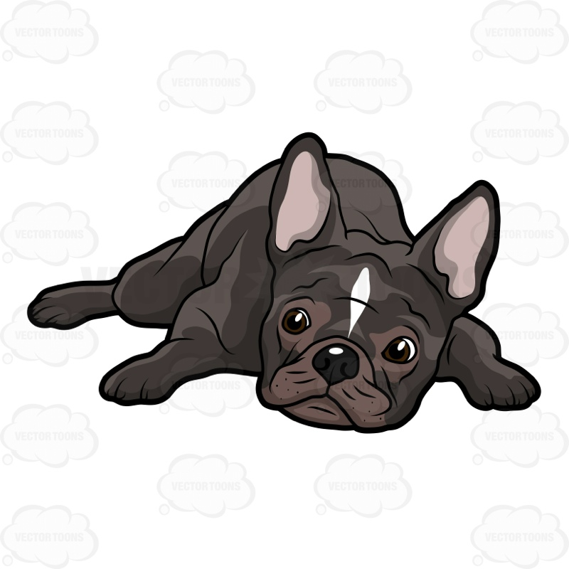 French Bulldog Lying Down With .-French Bulldog Lying Down With .-12