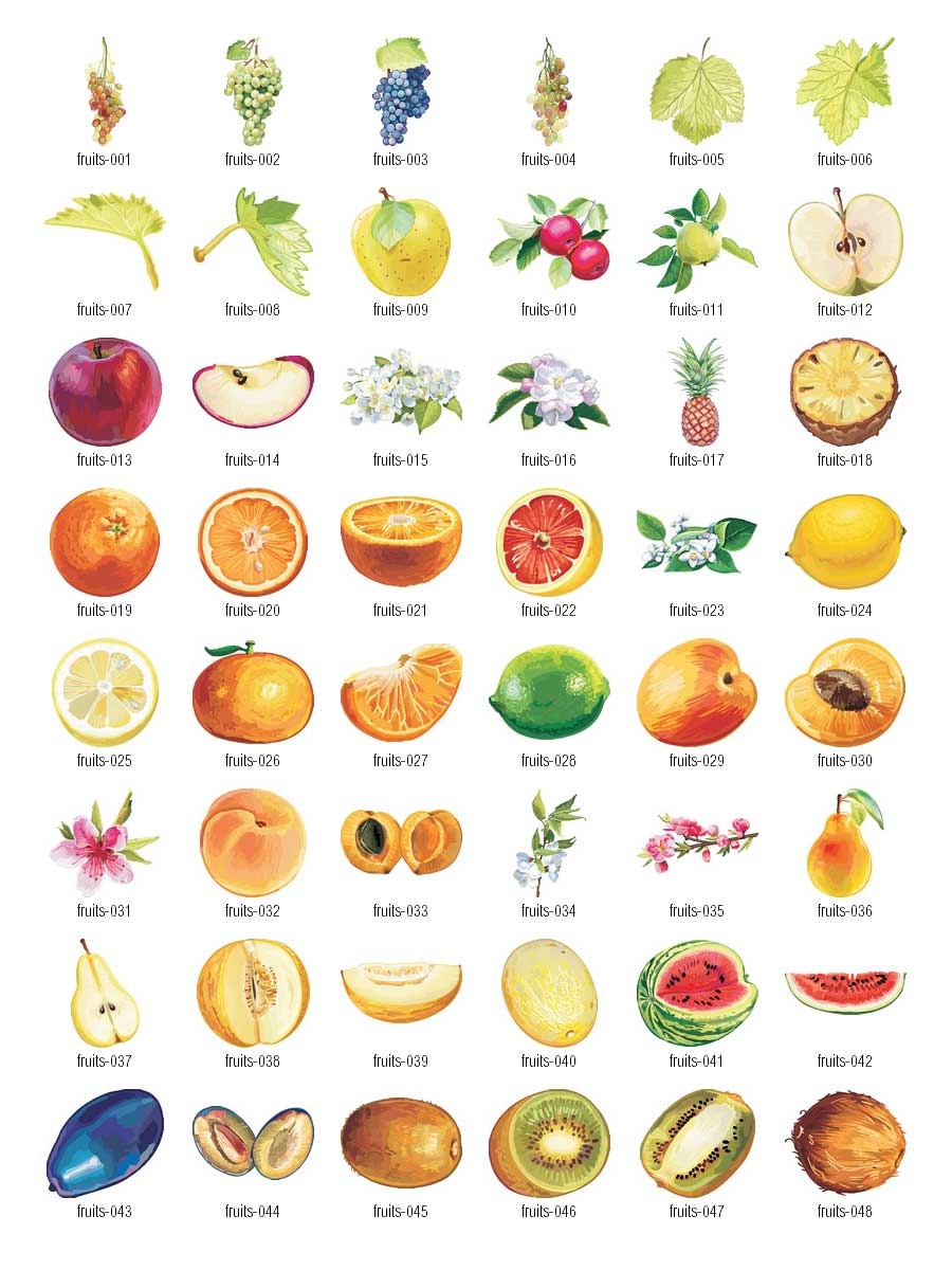 Fruits-vector-clipart-1-Fruits-vector-clipart-1-18