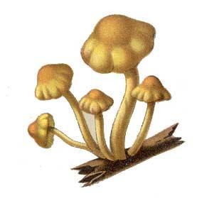 Fungi Clipart Cas Mushrooms008a Jpg-Fungi Clipart Cas Mushrooms008a Jpg-4