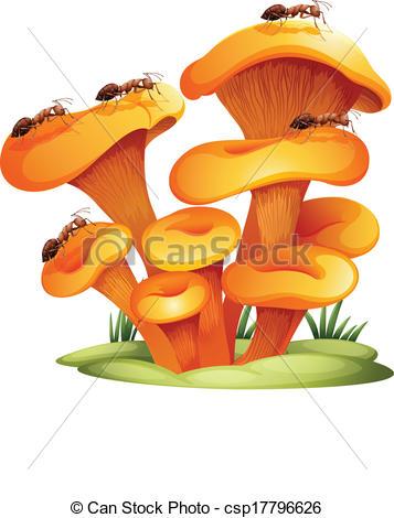Fungi With Ants - Csp17796626-Fungi with ants - csp17796626-11