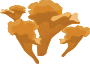 Fungus Clip Art-Fungus Clip Art-12