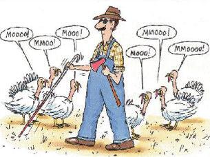 Funny Thanksgiving Turkey .-Funny Thanksgiving Turkey .-13