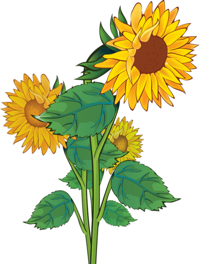 Gallery For Rustic Sunflower Clip Art-Gallery For Rustic Sunflower Clip Art-7