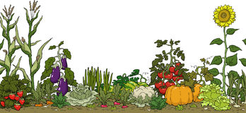 Garden clip art border free free clipart images