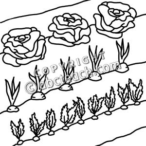 white vegetable gardening .