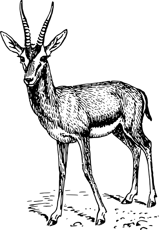Gazelle Clipart