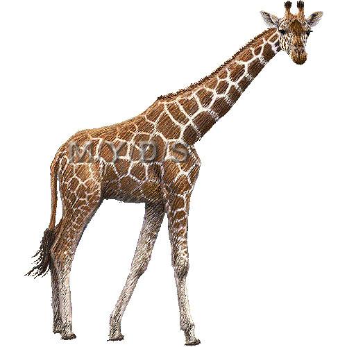 giraffe clip art - Giraffe Clipart