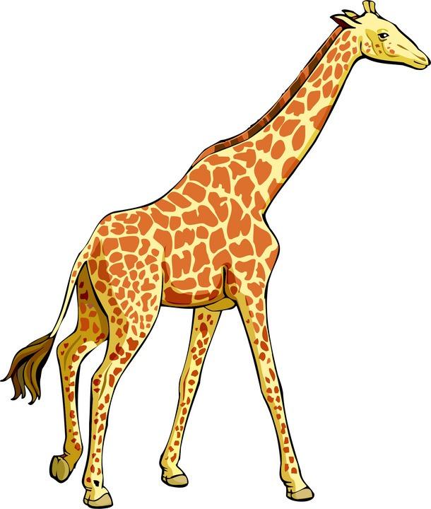 Giraffe Clip Art-Giraffe Clip Art-15