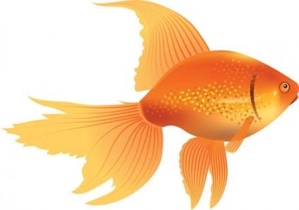Goldfish clipart - ClipartFest-Goldfish clipart - ClipartFest-6