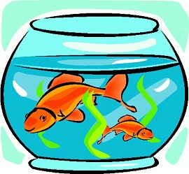 Goldfish in bowl-Goldfish in bowl-15