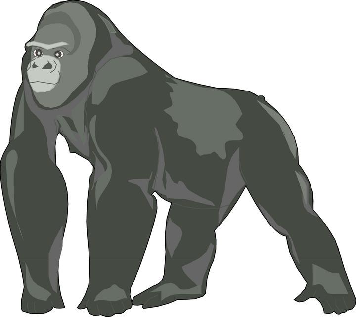 Gorilla Clip Art | Clipart Library - Fre-Gorilla Clip Art | Clipart library - Free Clipart Images-7