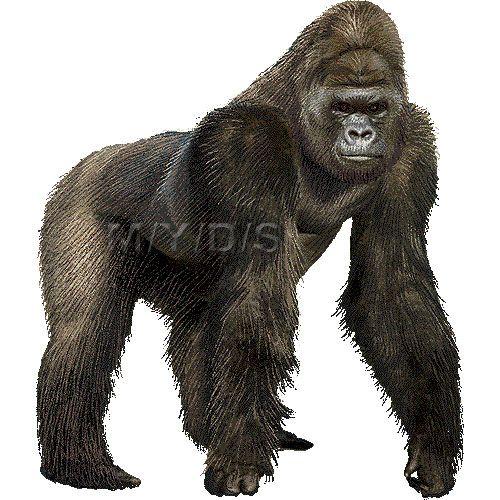 Gorilla clipart picture / Lar - Gorilla Clip Art