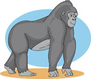 Gorilla Size: 71 Kb