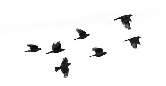 Graceful Birds Flying In North Atlanta Park Flickr Photo Sharing