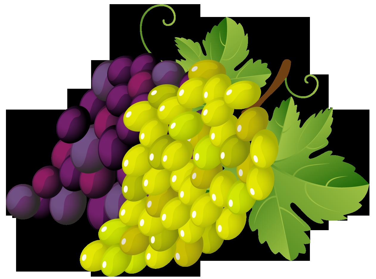 Grape Clip Art. Grapes-Grape Clip Art. Grapes-4