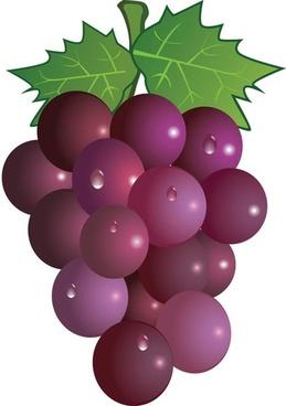 grape free vector-grape free vector-10