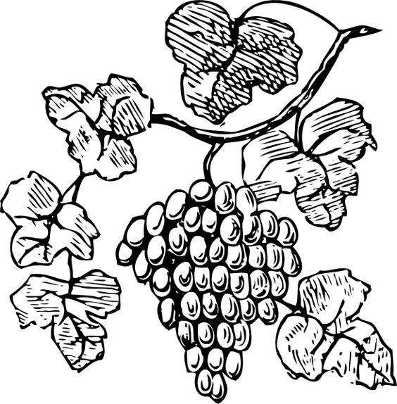 Grape Vine Clip Art Free | Grapes clip art - vector clip art online, royalty