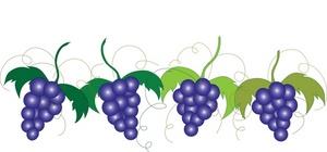 grapes vine clipart