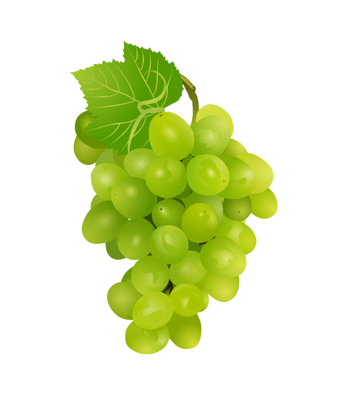 Grapes Clipart-Clipartlook.com-715