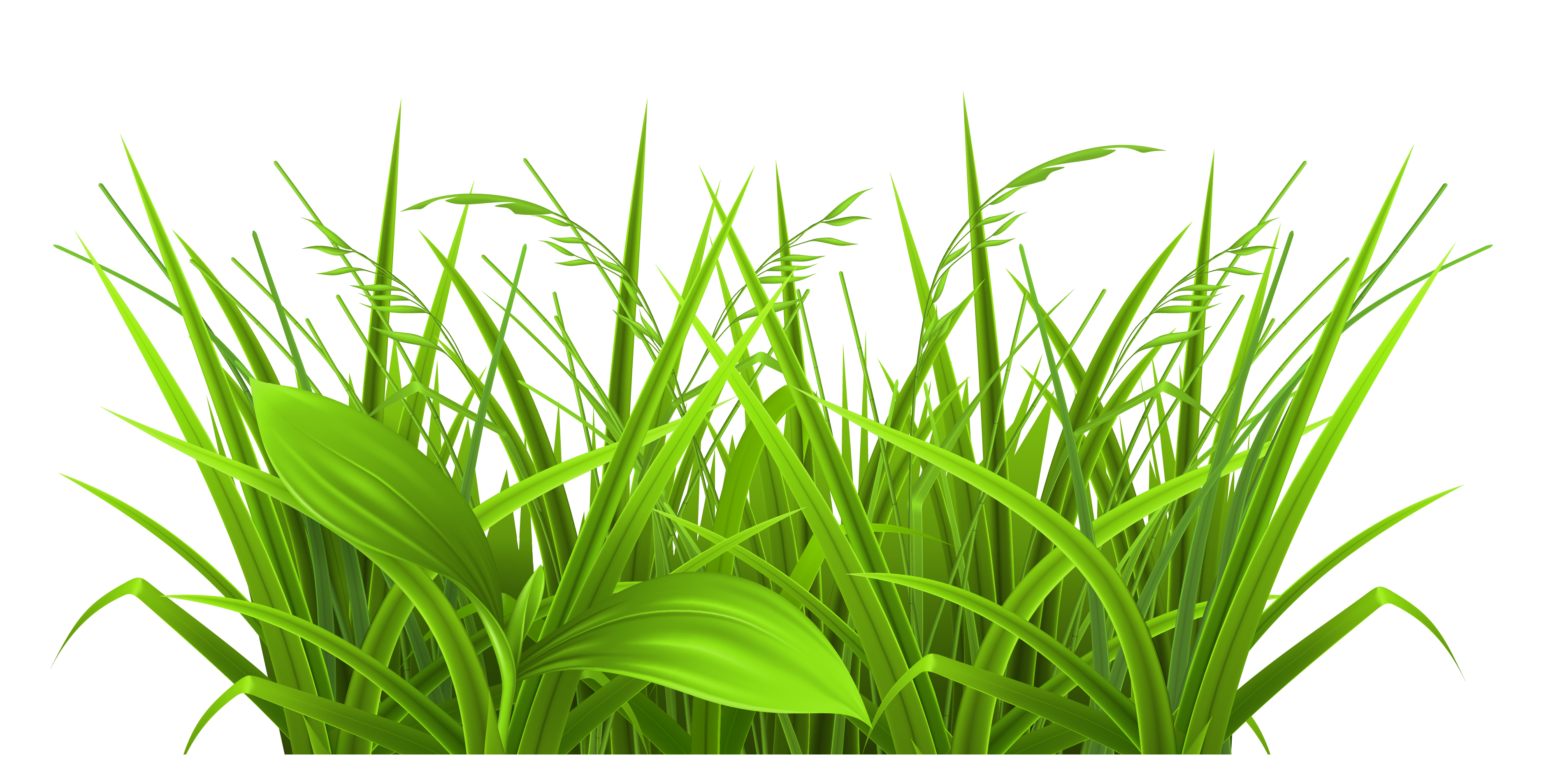 Grass Clipart And Green Grass .